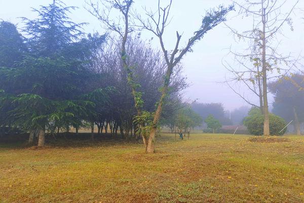 白雾下的枯黄草坪.jpg